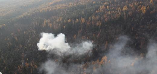 Пожары в Брянской области